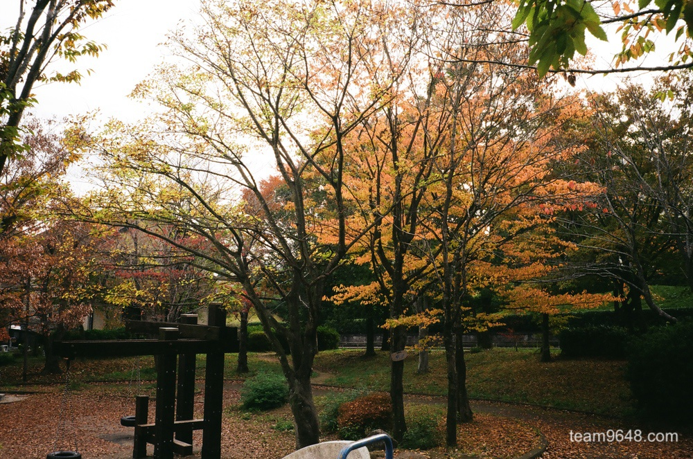 楽天から簡単に注文できる、桜カメラさんで郵送現像したフィルムが戻ってきた。TRIP35デビュー。