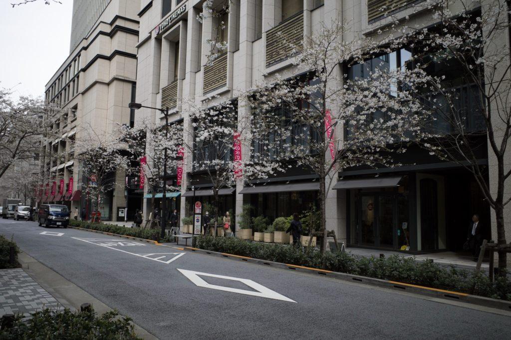 GR3 桜 日本橋