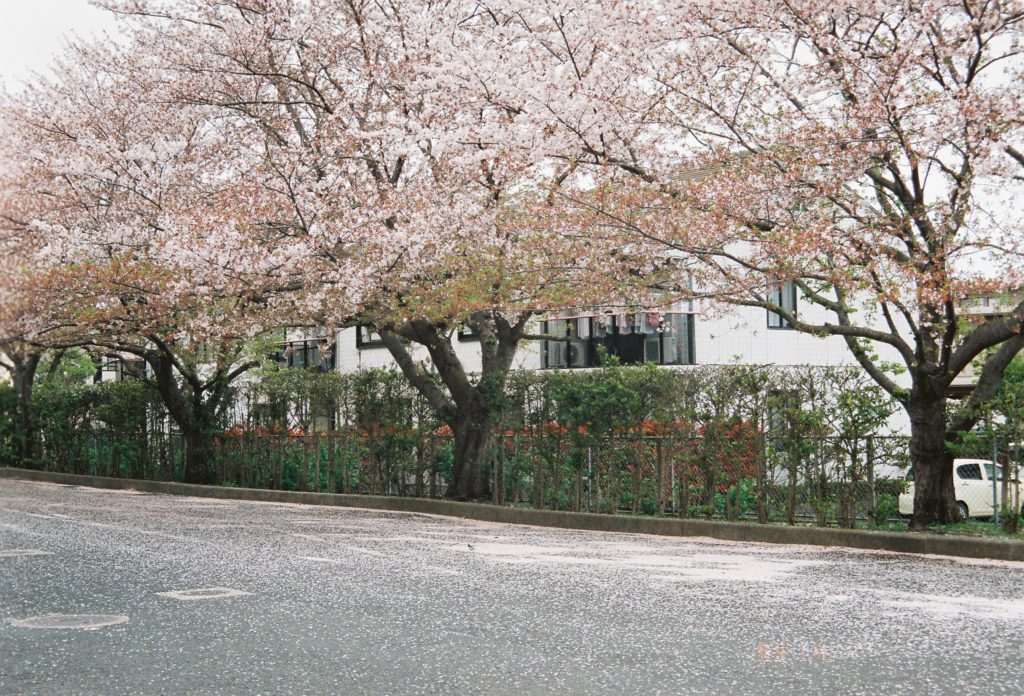 ナチュラ 作例 桜