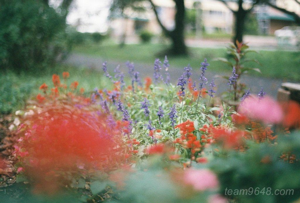 【フィルム作例】FUJIFILM 業務用400で撮る雨の日 (CONTAX RX / Planar 50mm F1.4)