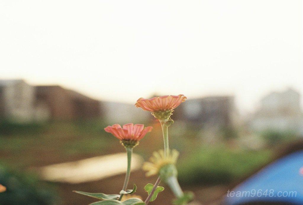 Kodak GOLD200 花の作例