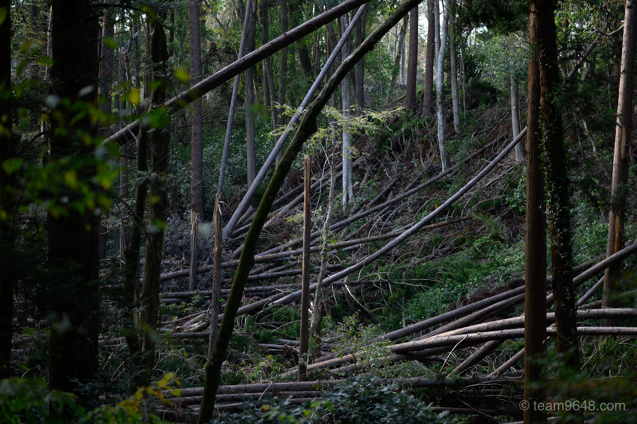 千葉 公園 台風での倒木