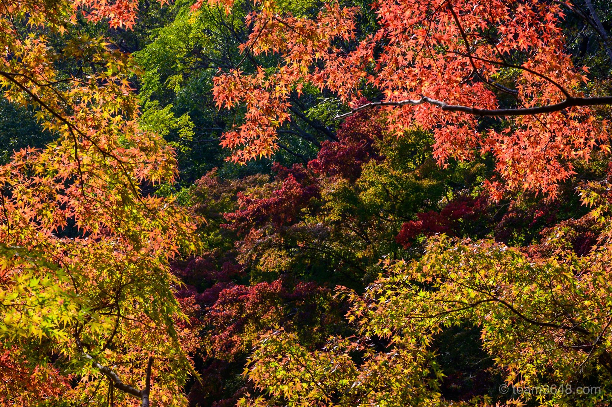 泉自然公園 紅葉