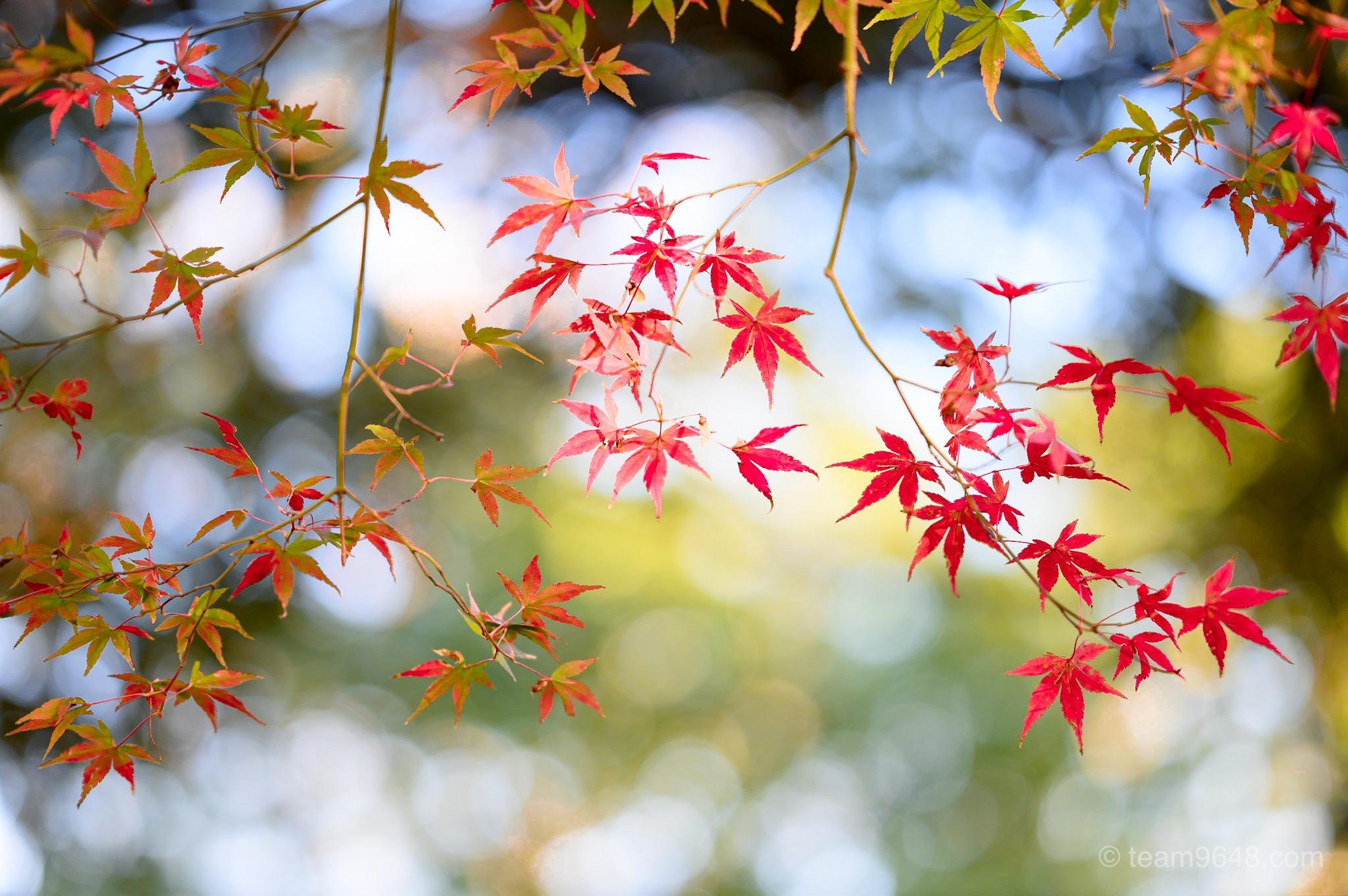 成田山公園 紅葉 秋