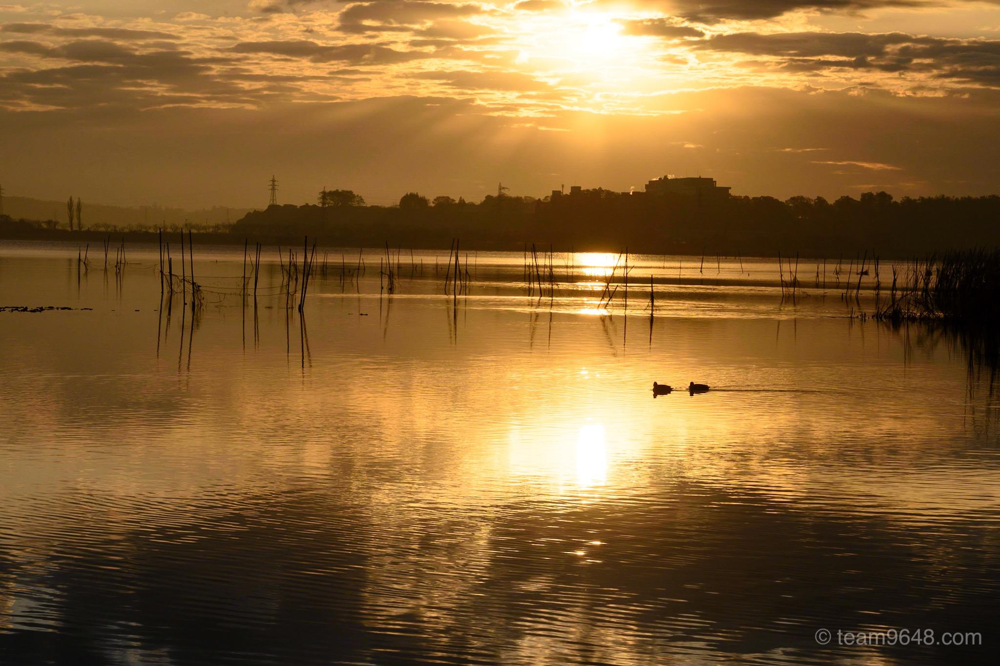 印旛沼の朝日と鳥
